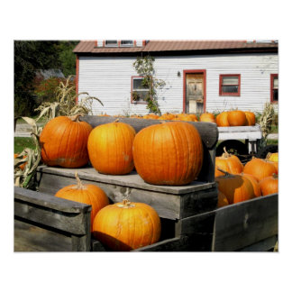 USA, Vermont. Pumpkins Poster