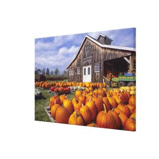 USA, Vermont, Shelbourne, Pumpkins Canvas Prints