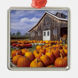 USA, Vermont, Shelbourne, Pumpkins Christmas Ornament