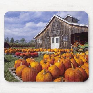 USA, Vermont, Shelbourne, Pumpkins Mouse Mat