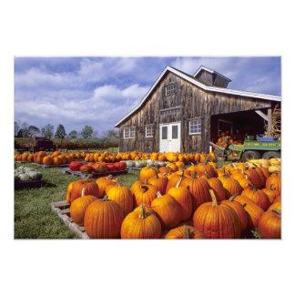 USA, Vermont, Shelbourne, Pumpkins Photographic Print