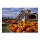 USA, Vermont, Shelbourne, Pumpkins Poster