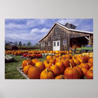 USA, Vermont, Shelbourne, Pumpkins Poster