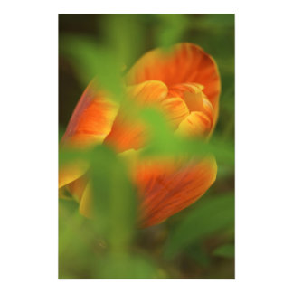 USA, Virginia, Arlington, closeup of orange Photo