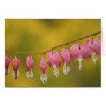 USA, Virginia, Arlington, closeup of pink Greeting Card