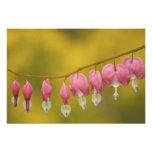 USA, Virginia, Arlington, closeup of pink Photographic Print