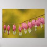 USA, Virginia, Arlington, closeup of pink Poster