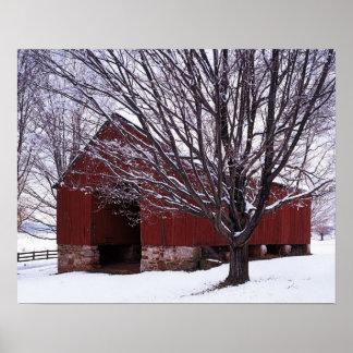 USA, Virginia, Fairfax County, Barn and Maple Posters