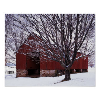 USA, Virginia, Fairfax County, Barn and Maple Poster