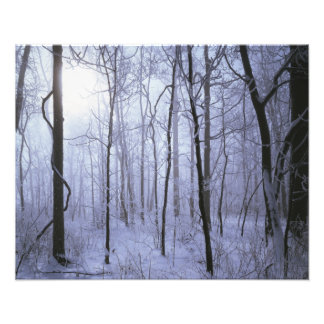 USA, Virginia, Richard Thompson Wildlife Area. Photographic Print