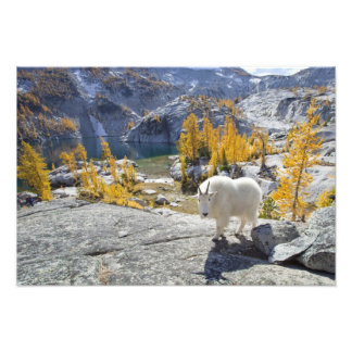USA, WA, Alpine Lakes WIlderness Enchantments. Photo