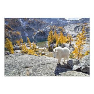 USA, WA, Alpine Lakes WIlderness Enchantments. Photographic Print