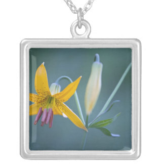 USA, WA, Mt. Rainier National Park. Columbia Silver Plated Necklace