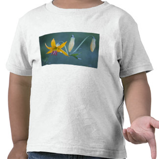 USA, WA, Mt. Rainier National Park. Columbia Tee Shirts