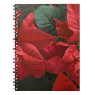 USA, WA, Red Poinsettia Detail (Euphorbia Notebook