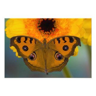 USA, WA, Sammamish, Tropical Butterfy 2 Photo Print
