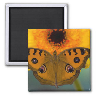 USA, WA, Sammamish, Tropical Butterfy 2 Square Magnet