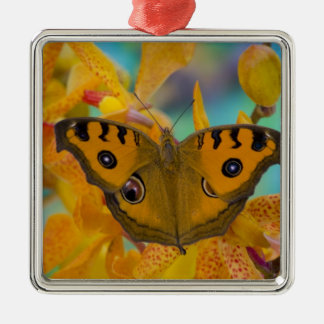 USA, WA, Sammamish, Tropical Butterfy 3 Christmas Ornament