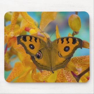 USA, WA, Sammamish, Tropical Butterfy 3 Mouse Mat