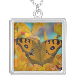USA, WA, Sammamish, Tropical Butterfy 3 Silver Plated Necklace