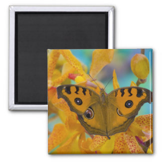 USA, WA, Sammamish, Tropical Butterfy 3 Square Magnet