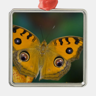 USA, WA, Sammamish, Tropical Butterfy Christmas Ornament
