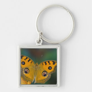 USA, WA, Sammamish, Tropical Butterfy Key Ring