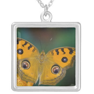 USA, WA, Sammamish, Tropical Butterfy Square Pendant Necklace