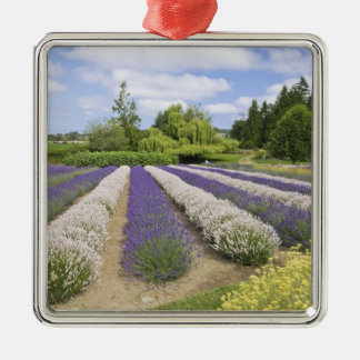 USA, WA, Sequim, Purple Haze Lavender Farm Christmas Ornament
