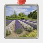 USA, WA, Sequim, Purple Haze Lavender Farm Silver-Colored Square Decoration