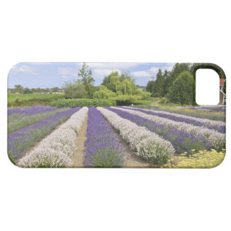 USA, WA, Sequim, Purple Haze Lavender Farm iPhone 5 Cover