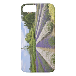 USA, WA, Sequim, Purple Haze Lavender Farm iPhone 8/7 Case
