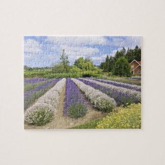 USA, WA, Sequim, Purple Haze Lavender Farm Jigsaw Puzzle