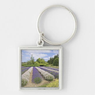 USA, WA, Sequim, Purple Haze Lavender Farm Key Ring