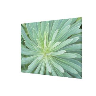 USA, Washington, Bellevue, Bellevue Botanical 4 Canvas Print
