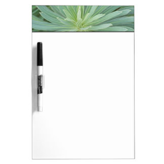 USA, Washington, Bellevue, Bellevue Botanical 4 Dry Erase Board