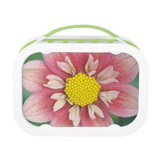USA, Washington, Bellevue, Bellevue Botanical Lunch Box