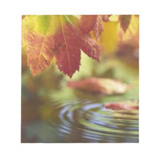 USA, Washington, Bellingham, Close-up of autumn Notepad