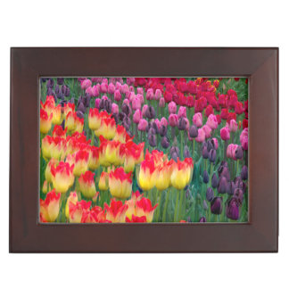 USA, Washington. Blooming Tulips 2 Keepsake Box