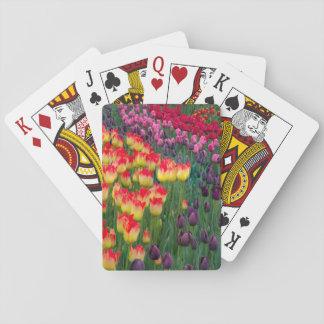 USA, Washington. Blooming Tulips 2 Playing Cards