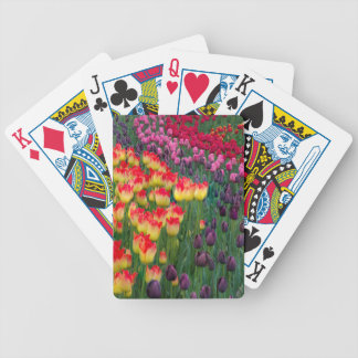 USA, Washington. Blooming Tulips 2 Poker Deck