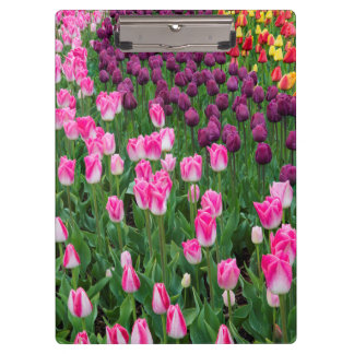 USA, Washington. Blooming Tulips Clipboard