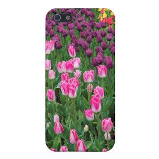 USA, Washington. Blooming Tulips iPhone 5 Covers