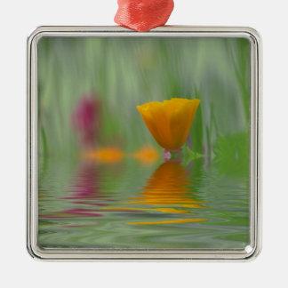 USA, Washington, Close-up abstract of California Silver-Colored Square Decoration