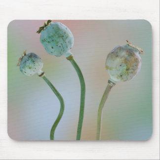 USA, Washington. Close-Up Of Colorful Poppy Seed Mouse Mat