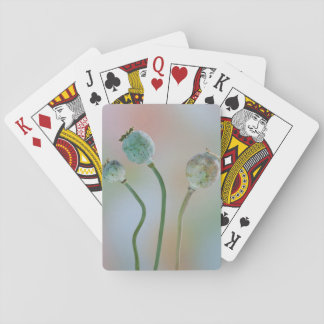 USA, Washington. Close-Up Of Colorful Poppy Seed Playing Cards