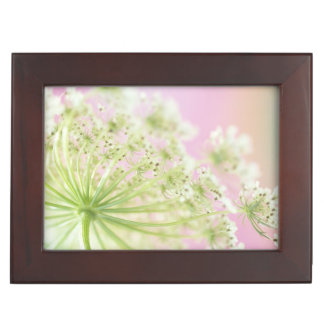 USA, Washington, Close-up of cow parsnip Keepsake Box