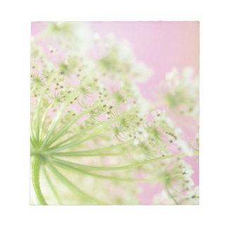 USA, Washington, Close-up of cow parsnip Notepad