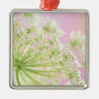 USA, Washington, Close-up of cow parsnip Silver-Colored Square Decoration