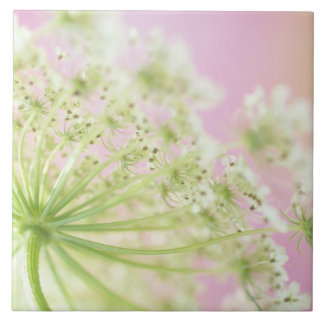 USA, Washington, Close-up of cow parsnip Tile